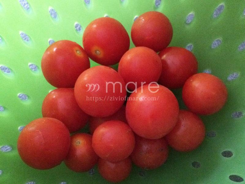 イタリアはトマトがおいしい!すぐ食べられる保存方法が便利3